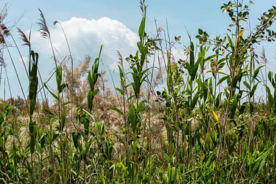 Vegetación en el antiguo delta del río Llobregat